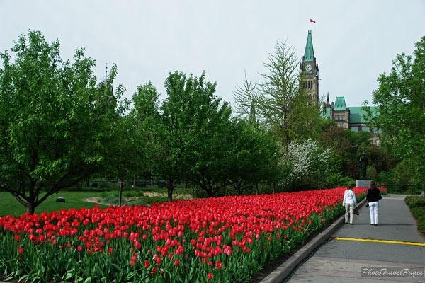 Tulip Festival, Ottawa, Ontario
