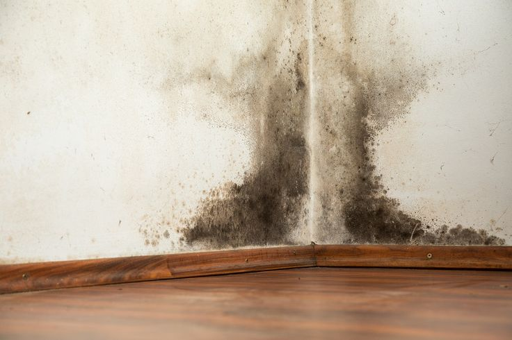How To Remove Black Mold From Walls via @https://www.pinterest.com/removeblackmold/