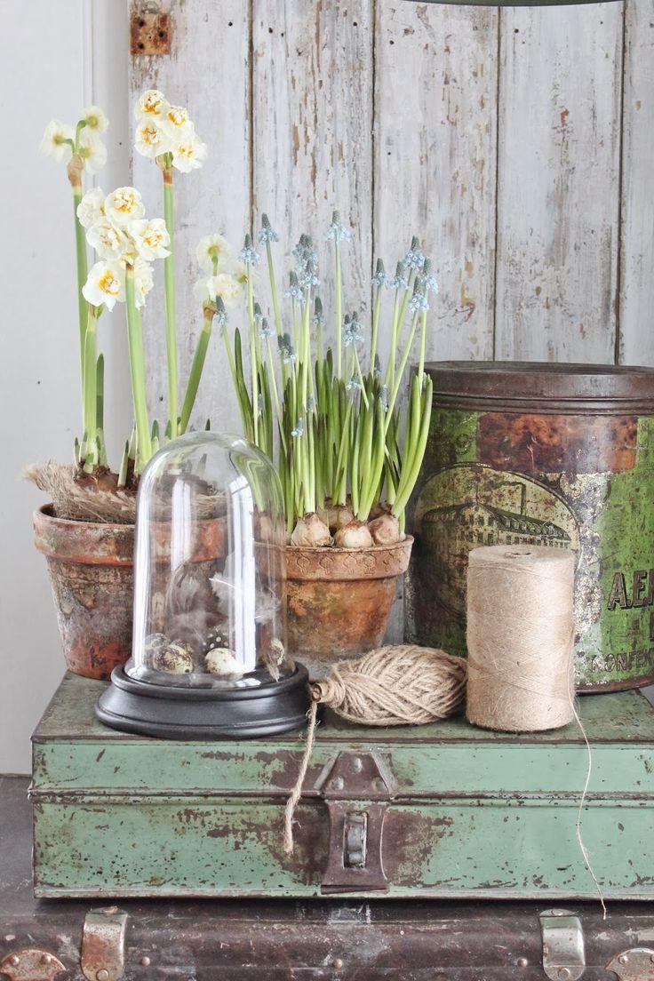 Lovely spring bulbs in pots V i n ⓣ a g e . I n t e r i o r s