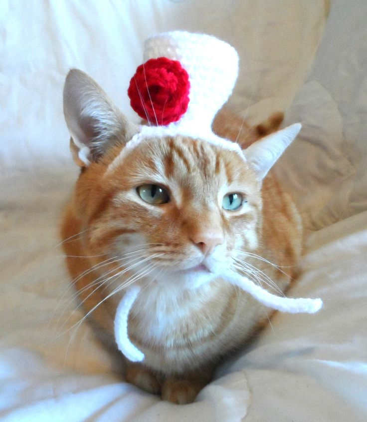 Top Hat for Cat, Cat Hat, Cat Crochet Hat, Novelty Hat for Pets, Wedding Hat, Cat Marriage. - pinned by pin4etsy.com