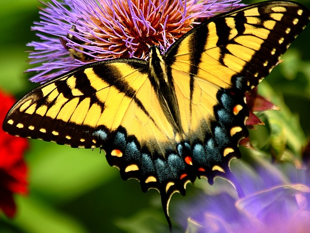 ~~Perfect Wing~ Butterfly by YG Low~~