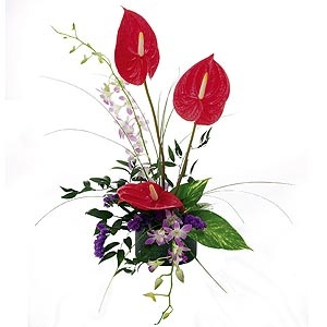 A special floral arrangement of orchids and antirrhinums are among the most popular tropical flowers gifted with a long vase life. Send it now for only $63. Want More? Please visit http://www.flowersnext.com/florist/category/sympathy.asp