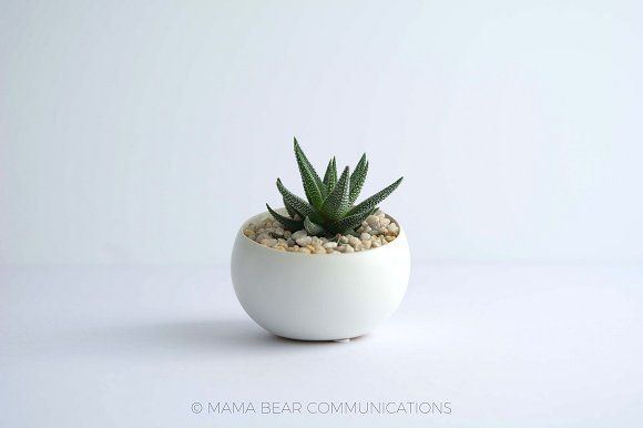 Styled Stock Photo | Succulent by mamabearcomms on @creativemarket