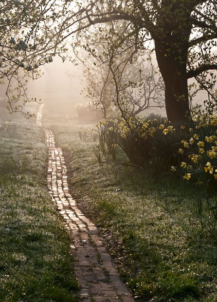 Orchard Path at Sunrise. 3rd Place, Beautiful Gardens. Picture: Carol Casselden, International Garden Photographer of the Year