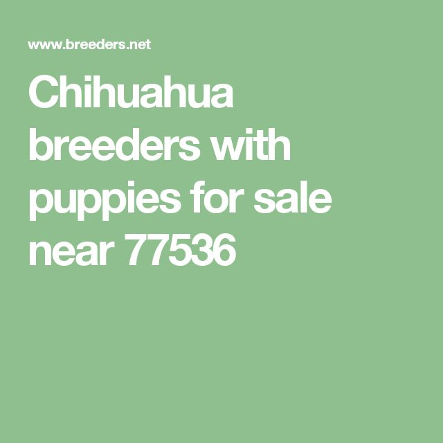 Chihuahua   breeders with puppies for sale near 77536