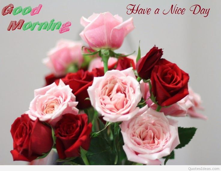 gd mrng pics with flowers siewalls co