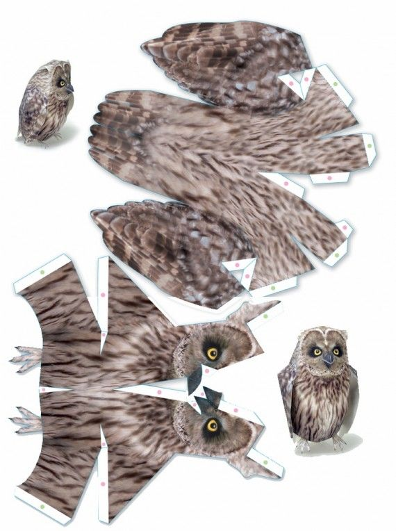 essay on owl bird for kids Quail is a bird that belongs to the pheasant family (even though they do not look  alike, quails and pheasants are closely related)  some species of quails are  hunted as game birds, or because of their meat  interesting quail facts:  main  predators of quails are cats, foxes, coyotes, raccoons, hawks, owls and snakes.