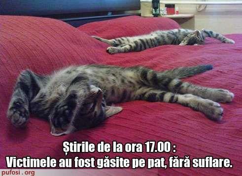 poze-amuzante-pisici-ucise-la-stirile-de-la-ora-5_ce676e142a928e.jpg (491×358)
