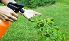 Te mostramos una receta casera tan efectiva como fácil de hacer que podrás usar en tu jardín y tu huerto casero!