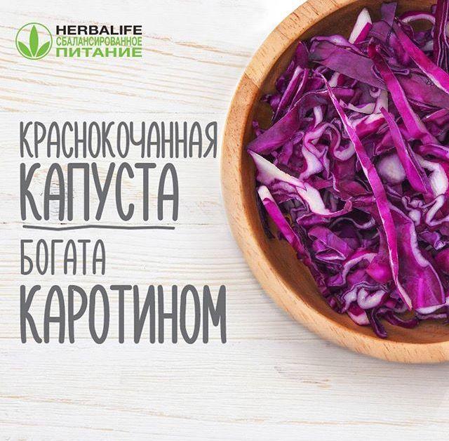 По сравнению с белокочанной #краснокочанная_капуста может показаться суховатой #на_вкус, зато питательных веществ и витаминов в ней  куда больше. К примеру, по содержанию каротина она опережает белокочанную капусту в 4 раза! Кроме того, краснокочанная #капуста богата  антоцианом. Это он придает ей «остринку» и вместе с тем повышает #упругость_капилляров.  #заботаоглавном #здоровье  #истиннаякрасота #правильноепитание  #красота #молодость #минусразмеры #похудение #диета #калории #фитнес…