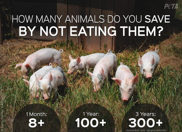 How does going #vegan help animals? The numbers speak for themselves.  #FriendsNotFood  @peta @PETAUK @PetaIndia