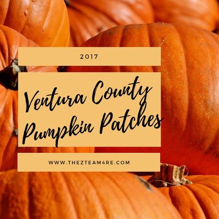 Chances are good that there are great 2017 Ventura County Pumpkin Patches located somewhere near you. Which one do you like the most?