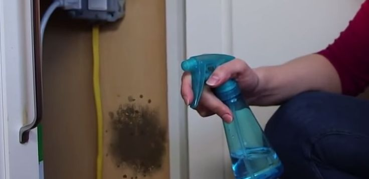 mold-wall | Common Household Product Completely Destroys Mold