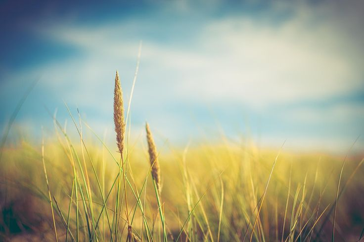 Photograph Wheat by Demangel Eric on 500px