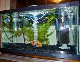 aksesoris akuarium kecil,aksesoris aquarium batu hias murah,alat alat aquarium dan fungsinya,apa saja perlengkapan aquarium,harga perlengkapan aquarium,hiasan akuarium air tawar,