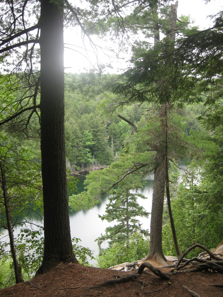 Algonquin Provincial Park (woodland trails, take me home)
