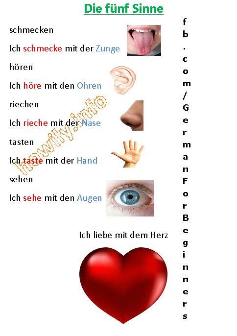 German For Beginners: senses in German