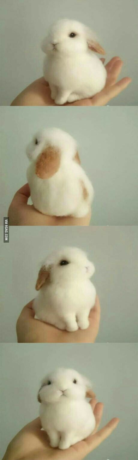Cutest baby bunny