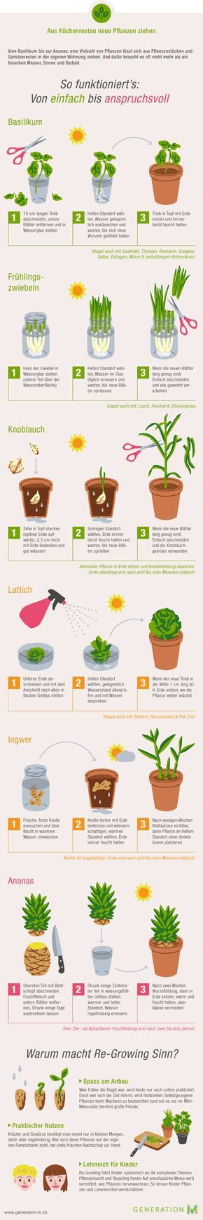 Die Infografik zeigt Ihnen wie Sie aus Küchenresten neues Gemüse ziehen. Drucken Sie die Grafik aus und ziehen Sie Ihr eigenes Gemüse. Viel Spass!