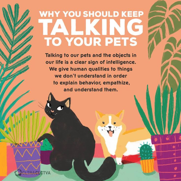 You're not crazy for talking to your pets, it actually makes you smarter!