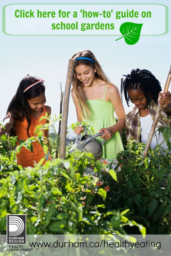 Are you thinking about starting a school garden? Great idea! School gardens are gaining momentum as a valuable new platform for student learning. For information on starting a school garden, check out our new resource 'A Guide to School Gardens' #learn #healthyeating #curriculum