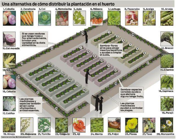 Una alternativa de cómo distribuir la plantación en el huerto - An alternative of how to distribute planting in the garden