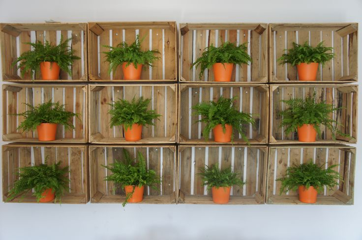 #polypody #wood #apples #secondlifeof things #pallets #walldeco #office #iteo