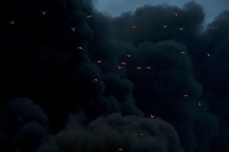Fire reflected on birds in smoke, at Moerdijk, the Netherlands