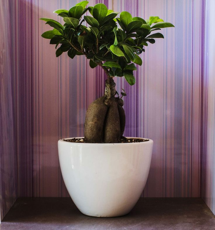 Il bonsai che è sul tuo davanzale perde sempre le foglie. Hai provato tutte le soluzioni, ma non hai trovato quella giusta?