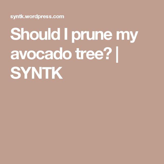 Best 25 Avocado Tree Ideas On Pinterest Growing Avocado Grow Avocado Tree And How To Grow