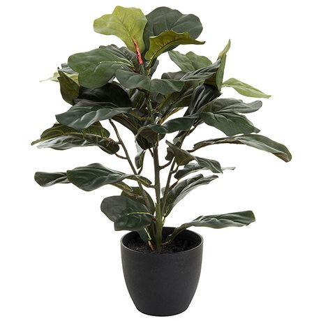 Foliage Fiddle Leaf Fig 61cm Pot