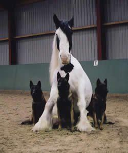 Posse - Horses and German Shepherds, two of my favorite animals!! :-)
