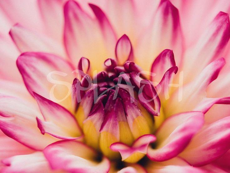 detalle flor sp cuadro impresin sobre lienzo cuadros de flores cuadros de flores