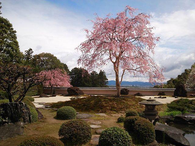 SAKURA 5 Come spring(*^▽^)/★*☆♪ Shoboji-temple. 春よこいシリーズ、過去pic.京都の正法寺 #春よこい #kyoto #pic #写真撮ってる人と繋がりたい #写真好きな人と繋がりたい #カメラ好きな人と繋がりたい #カメラ女子 #東京カメラ部 #ig_nippon #ig_japan #ig_flower #flowerstagram #flowermagic #正法寺 #shoboji  #icu_japan  #instagramflowers  #team_jp_ #loves_nippon  #loves_japan  #loves_flowers_  #sakura #flowers #temple  #jp_gallery #桜の季節 #ファインダー越しの私の世界