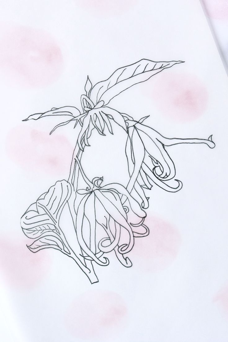 BEHIND THE SCENES - HOW YOUR CAMILLE CO. CANDLE CAME TO BE. Ylang ylang botanical drawing