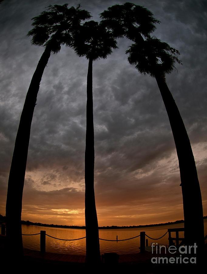 ✯ Florida Palm Trees