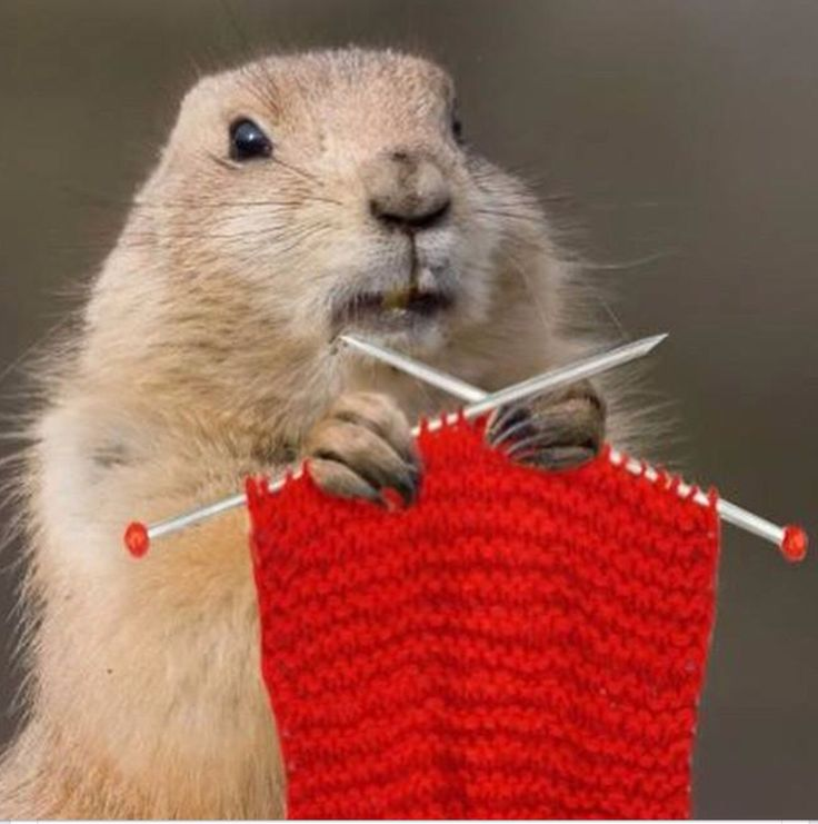 What do you mean it's plain - how many gofers do you know who can knit!
