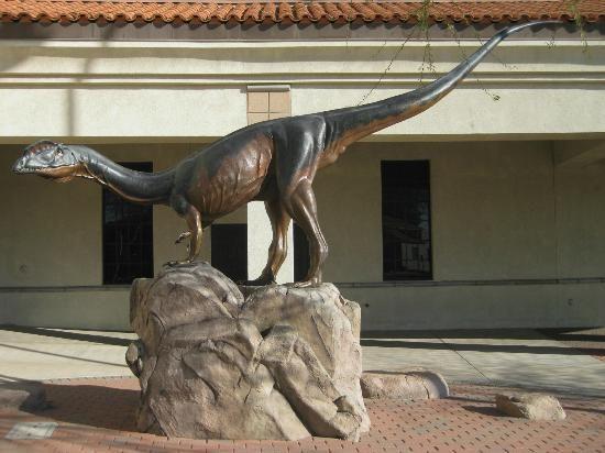 Museum Of Natural History Mesa Az Admission