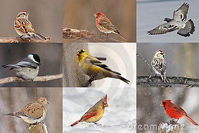 overzicht vogels in de winter - Google zoeken