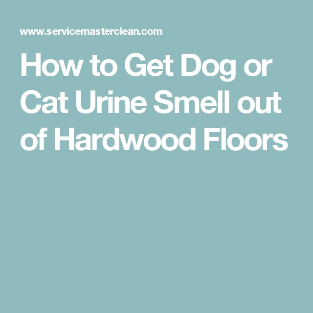 Best  Cat Urine Smells Ideas On Pinterest Dog Urine Remover - How to get dog urine out of hardwood floors