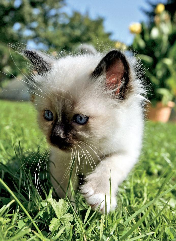 ... over Schattige Kittens op Pinterest - Katten, Kittens en Dieren
