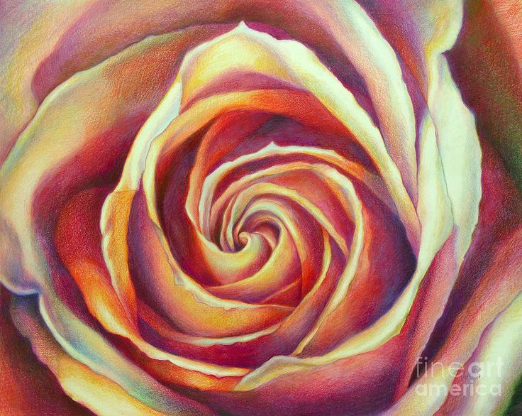 Vibrant canvas print canvas art by debra vronch pink for Amazing drawings of roses