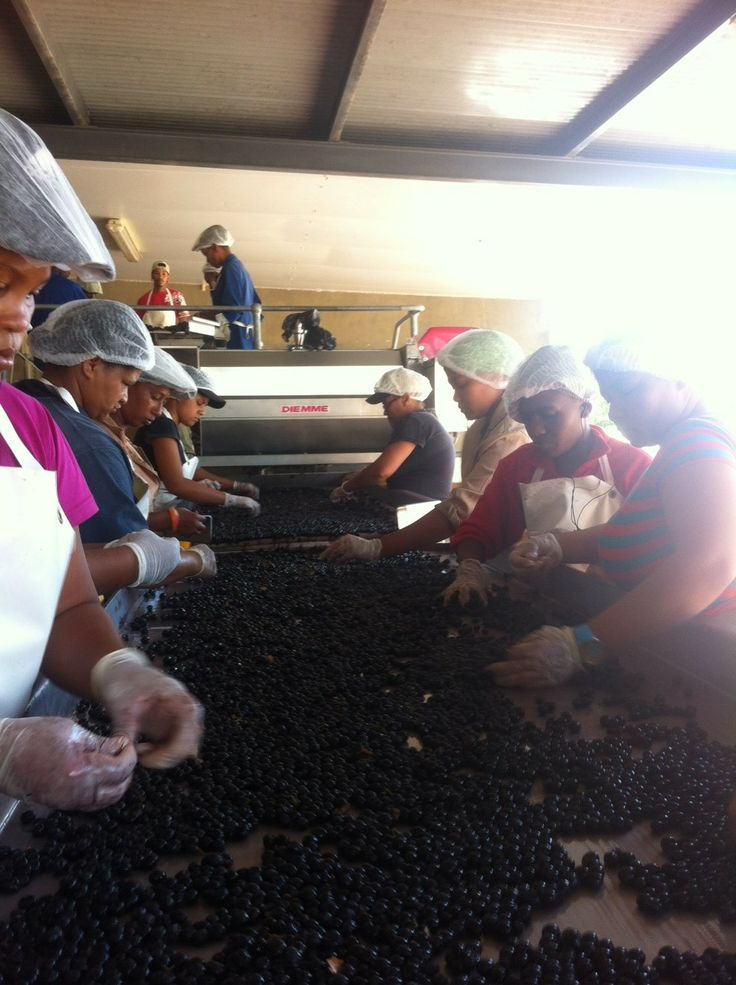 only carefully selected grapes make it into our #saronsberg #shiraz