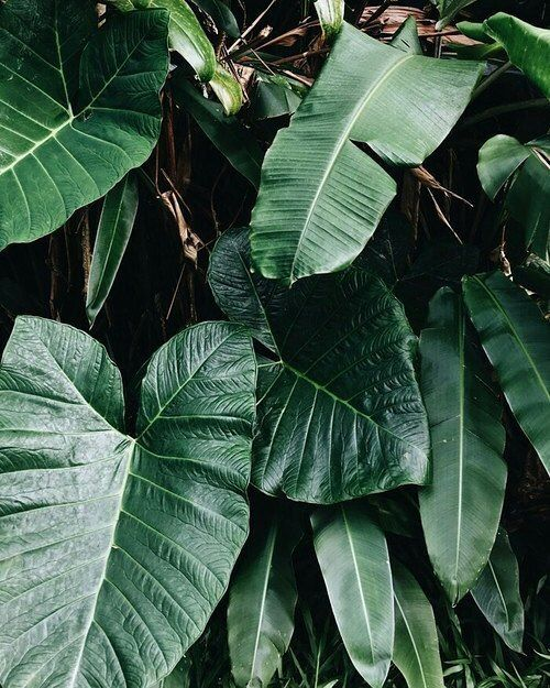 "1,396 Likes, 3 Comments - STYLE ADDICT (@styleaddict) on Instagram: ""Tropical ✨"""