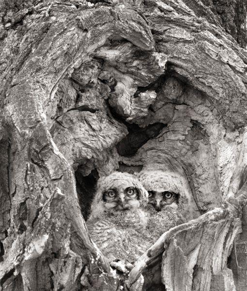 David Brookover Photgraphy.  I Blinked, Wyoming.