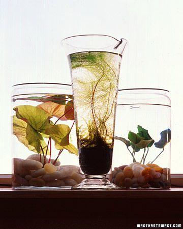How to make your own indoor water garden