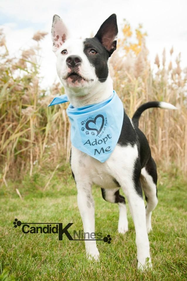 YoYo - For the Love of Paws Animal Rescue