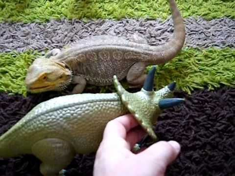 Bearded dragon attacks toy dinosaur (Attacks?! It was Self Defense!!! The Stego started it!!!)
