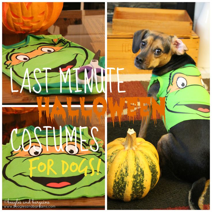 Best 25 diy dog costumes ideas on pinterest dog halloween last minute diy dog halloween costumes from baby onesies solutioingenieria Image collections