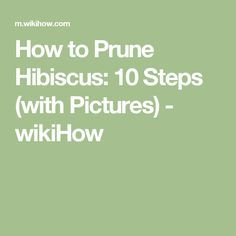 How to Prune Hibiscus: 10 Steps (with Pictures) - wikiHow